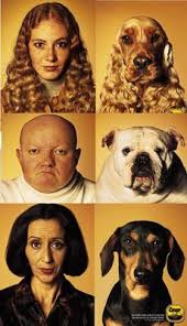 dogs and owners