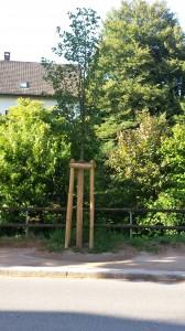 6.26.14 Tree in Kandern by stream